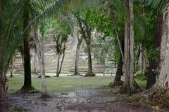 有寺庙的密林 免版税图库摄影