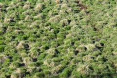 有小丘的沼泽地在春天 库存图片