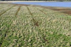 有小丘的沼泽地在春天 免版税图库摄影