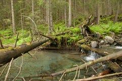 有小小瀑布的山河在杉木森林里 免版税库存照片