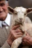 有小山羊的老人 免版税库存照片