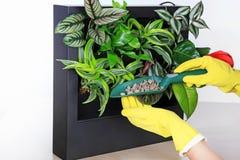 有小庭院铁锹的特写镜头手 关心对室内植物 免版税图库摄影