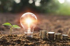 有小树和金钱堆的电灯泡在自然太阳的土壤 免版税库存照片