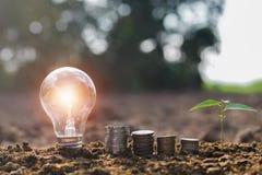 有小树和金钱堆的电灯泡在自然太阳的土壤 免版税图库摄影