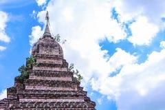 有小植物和生动的天空蔚蓝的古老砖塔在清迈,泰国 图库摄影