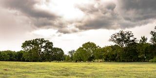 有小橡树全景的南部的牧场地 免版税库存照片