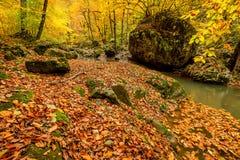 有小河的秋天森林 免版税库存照片