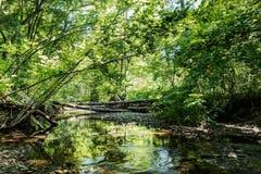 有小河的-高力学范围狂放的森林 免版税库存图片