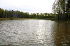 有小波浪的晴朗的森林湖 免版税库存图片