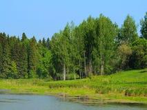 有小湖的夏天森林在清楚的蓝天下 图库摄影