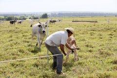 有小牛的农夫 免版税库存照片