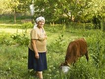 有小牛的老妇人 库存照片