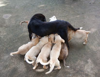 有小狗的母亲 图库摄影