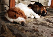 有小狗的狗母亲 免版税库存照片