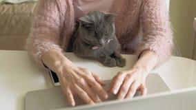 有小猫的可爱的妇女使用膝上型计算机 影视素材