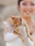 有小猫的新娘 免版税库存照片