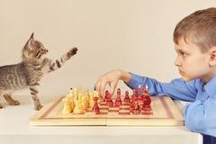 有小猫的年轻高段棋手下棋 图库摄影