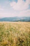 有小白花的夏天草甸 有薄雾的Forest Hills在作为背景的惊人的被覆盖的天空下 库存照片
