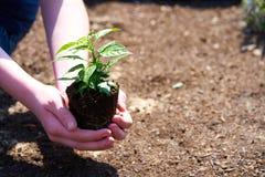 有小绿色植物的一个孩子 免版税库存图片