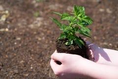 有小绿色植物的一个孩子 免版税图库摄影