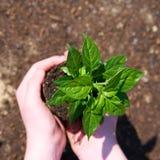 有小绿色植物的一个孩子 免版税库存照片