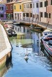 有小船和天鹅的运河在Burano海岛,意大利 免版税库存照片