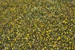 有小黄色和白花的绿色草甸 图库摄影