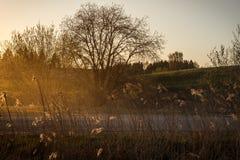 有尘土的空的石渣路在有树的乡下在surroun 库存照片