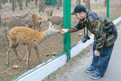 有尼康照相机的摄影师在国家公园喂养鹿 库存照片