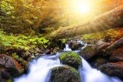 有山小河的秋季森林 免版税库存图片