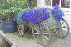 有山梗菜的古色古香的推车 免版税库存照片