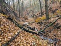 有山沟的落叶林 免版税库存图片