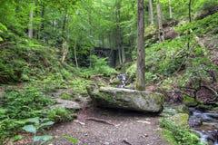 有山沟的落叶林 库存图片