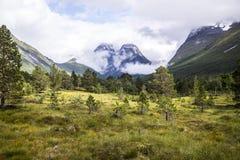 有山的森林在背景中 免版税库存图片