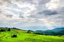 有山的玉米田在日出 免版税库存图片