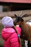 有山羊的一个小女孩 库存照片