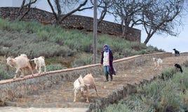 有山羊的女孩,摩洛哥 库存图片
