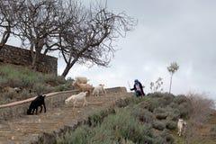 有山羊的女孩,摩洛哥 免版税库存照片