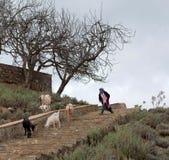 有山羊的女孩,摩洛哥 图库摄影