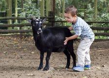 有山羊的孩子 图库摄影