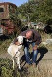 有山羊的老人 免版税图库摄影