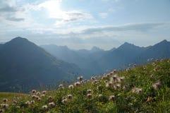 有山脉的高山野花草甸在背景中 免版税库存图片
