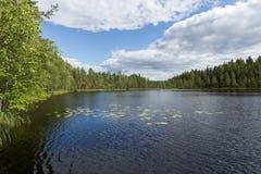 有岩石岸的湖 ?? 在杉木 芬兰的本质 免版税图库摄影