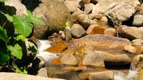 有岩石的不可思议的河 与急流的快速的岩石清楚的水晶小河 与小瀑布的蒸汽 飞溅落的水 股票录像