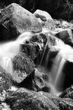 有岩石的软的溪河在森林里 免版税图库摄影