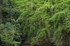 有峭壁的绿色森林 免版税图库摄影
