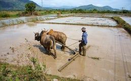 有工作在农场的水牛的农夫 免版税库存照片