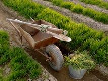 有工具的独轮车在春天庭院里 免版税库存图片