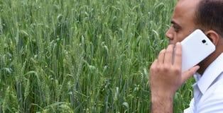 有巧妙的电话的农夫在他豪华的绿色麦子农场前面 库存照片
