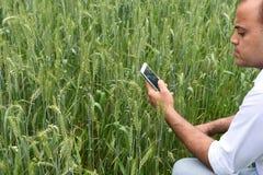 有巧妙的电话的农夫在他豪华的绿色麦子农场前面 免版税库存图片